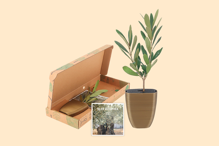 Olive-package-flyer2